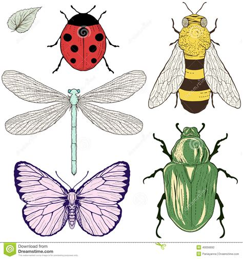 insects set drawing stock vector image 40056692