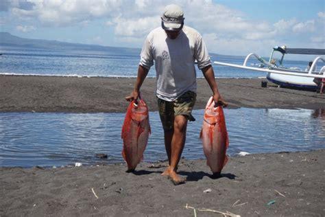 Banmala Kusamba Sea Salt Garam Laut Bali 250g kusamba gairah kehidupan warga pesisir klungkung mongabay co id