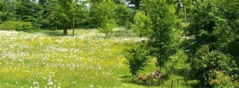 Plan De Jardin Sauvage by Cr 233 Er Un Jardin Sauvage