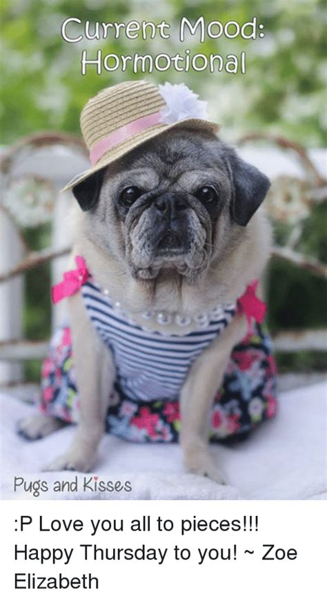 what pugs looked like before selective c 1880 rebrn search pugs meme memes on me me