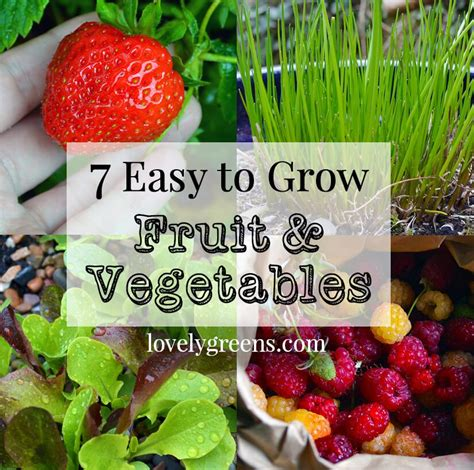 7 Easy To Grow Fruits Vegetables Lovely Greens What Are The Easiest Vegetables To Grow In A Garden