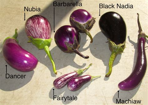 Different Names Of Green by Eggplant A Fairy Tale On Your Fork Land S Sake
