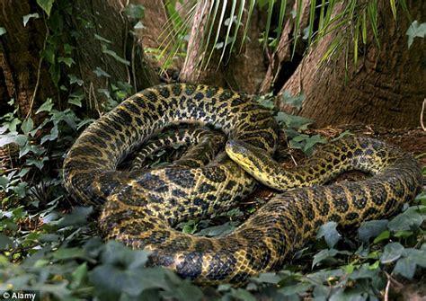 film ular cobra corajoso mergulhador filma momento em que se deparou com