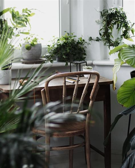 desk surrounded  lush indoor plants photography