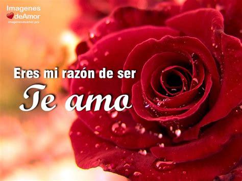 imagenes que bellas 10 im 225 genes de rosas hermosas para decir te amo