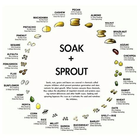 enzyme inhibitors in food soaking sprouting nuts seeds grains easy chart