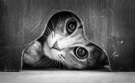 b w black and white blanco y negro bw justin bieber belles photos de chats en noir et blanc le blog de zapi