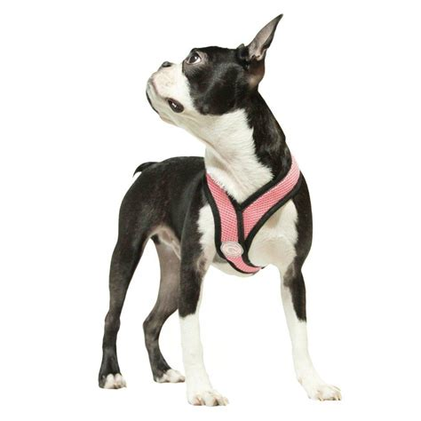 dog comfort harness comfort x dog harness by gooby pink with same day