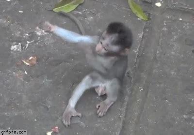 puppy monkey baby gif baby monkey hug best gifs updated daily