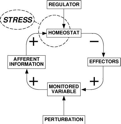 a systems definition of stress. | download scientific diagram