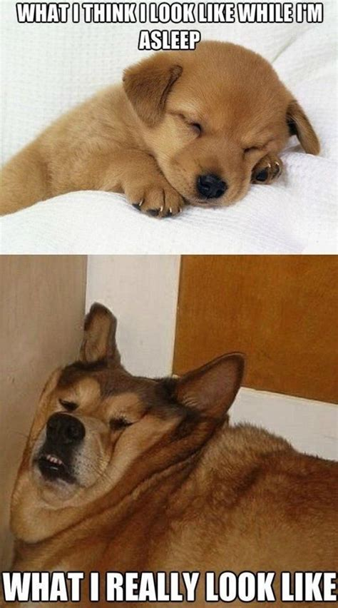 puppy memes puppy sleeping vs lazy sleeping meme