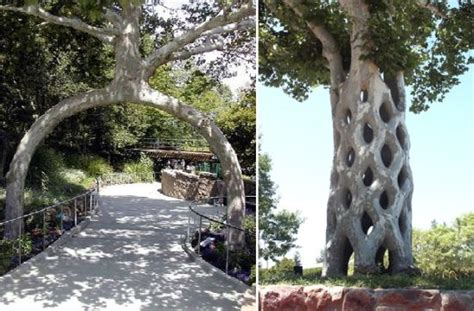 most amazing trees world s five most amazing trees you should of eco