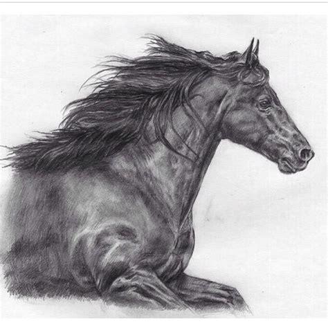 imagenes para dibujar muy dificiles uno de los animales mas dif 237 ciles de dibujar hermoso