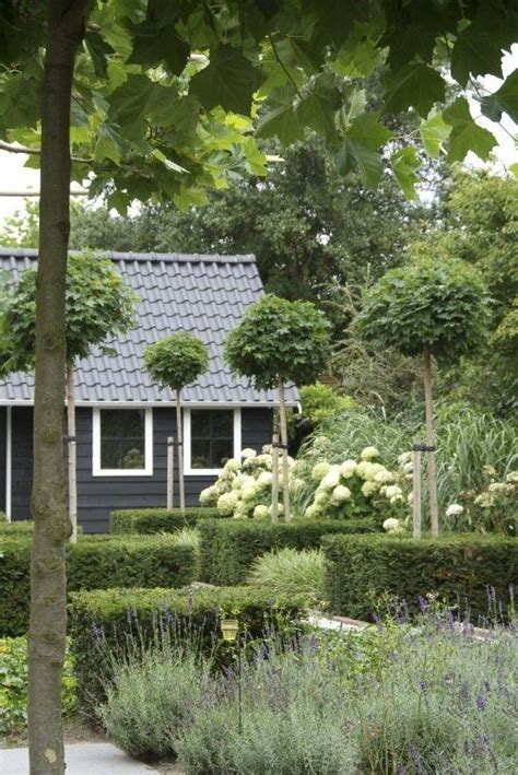 country style trees modern country style hydrangeas topiary and boxwood in