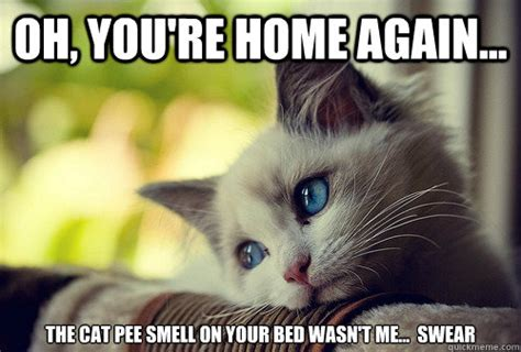 cat pee on bed cat urination behavior cat urine problems eliminated