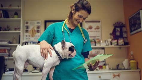 levothyroxine for dogs levothyroxine for dogs uses dosage and side effects dogtime