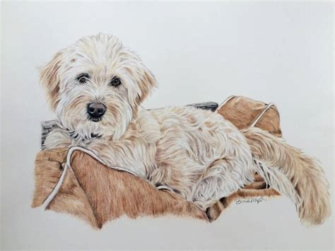 doodle dogs drawing goldendoodle puppy drawing