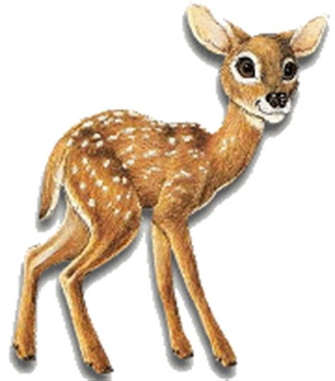 animated deer animation bundle animated deer and bucks best collection