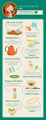 ant repellent home remedy how to get rid of ants in the house naturally and easy