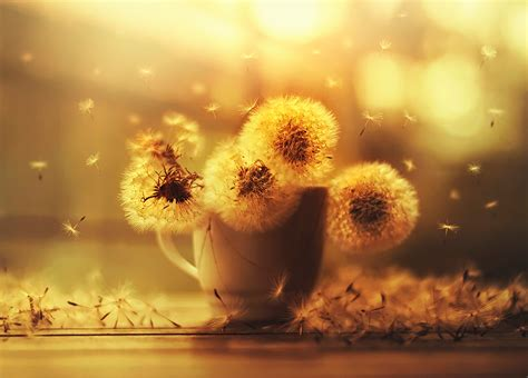 Flower Photography by Flower Photography Series Ashraful Arefin