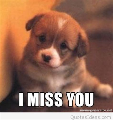 you puppy i miss you picture