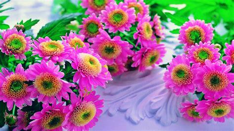 wallpaper hd pink flowers pink flowers beautiful hd wallpaper flowers desktop hd