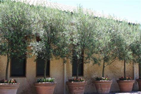 landscaping and outdoor building options of tuscan