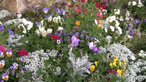 Flower Garden Los Angeles Flowers That Come In Different Colors Flower Small Garden Los Angeles Ca