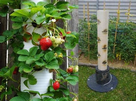 strawberry vertical garden made from pvc find