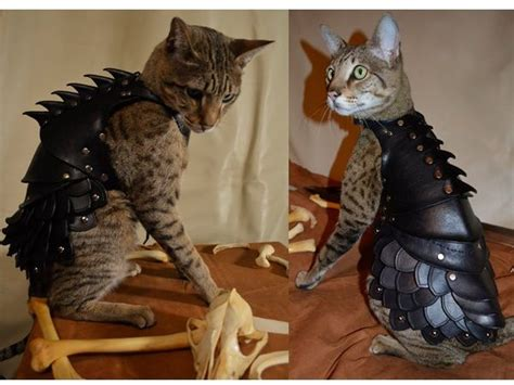 Leather Cats by Cat Leather Armor Pets