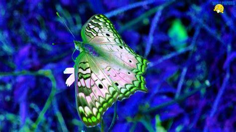 green butterfly desktop wallpaper blue and green butterfly backgrounds