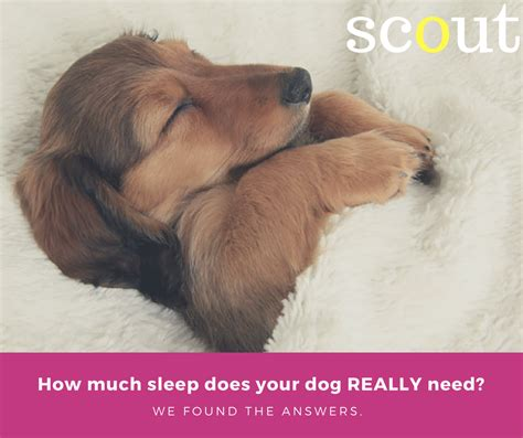 how many hours of sleep does a puppy need scout 35 healthy snacks for toddlers