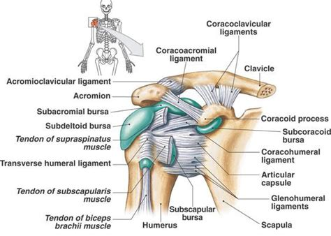 posterior shoulder pain bench press shoulder instability