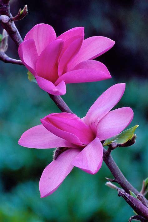 Indocustomcase Botanical Flower Apple Iphone 7 Or 8 Cover mejores 17 im 225 genes de investigando thinglink grupo 7 en