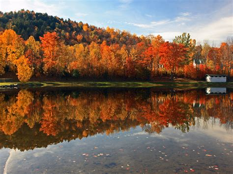 Which Biome Is Logging Hardwood Trees - temperate deciduous forest fall