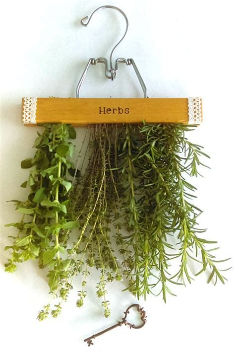 hanging herbs 25 best ideas about hanging herbs on pinterest hanging herb gardens herb garden indoor and