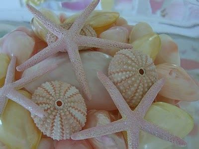 Cottage Decor 5730 by 357 Best Images About Beachy Chic On Bottle