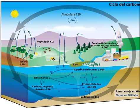 carbon cycle picture diagram file carbon cycle diagram espanol svg