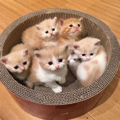 i love cats cute cat kitten pictures cute cat the 25 best cute cats ideas on pinterest