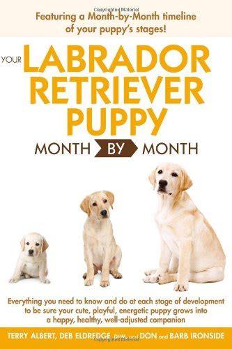 labrador puppy care your labrador retriever puppy month by month health health care mobility