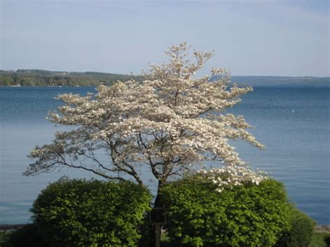 skaneateles bed and breakfast the 10 best skaneateles bed and breakfasts of 2017 with prices