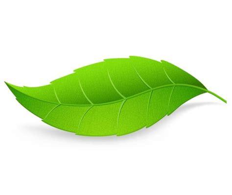 imagenes hojas verdes dibujos hojas verdes imagui