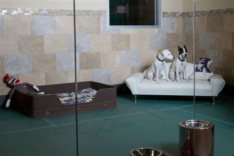 puppy hotel top 5 luxurious pet hotels