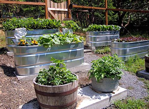 trough garden containers barrel garden trough gardening progress report