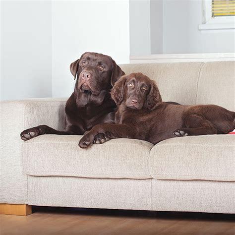 affordable dog beds affordable dog beds 28 images cheap extra large dog