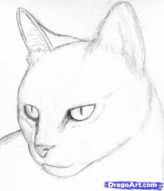 how to draw a cat head draw a realistic cat step by step pets animals free online drawing