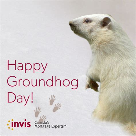 groundhog day groundhog name happy groundhog day