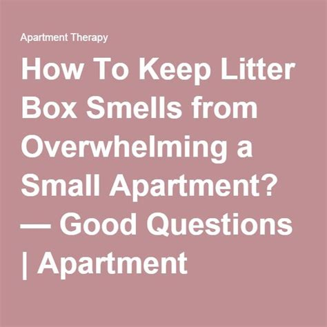 how to litter a small 25 best ideas about litter box smell on litter box litter boxes