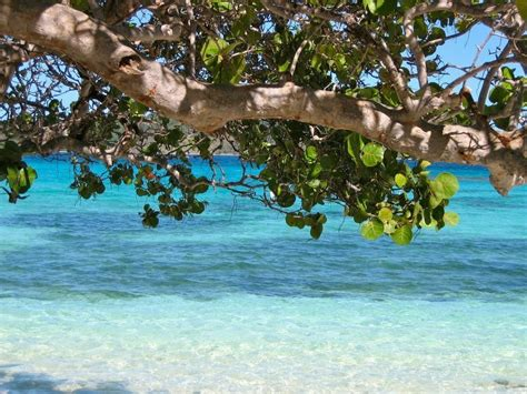 best barbados the best beaches in barbados for globetotting