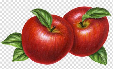 apple  hand clipart   cliparts  images